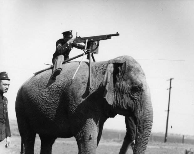elephant mounted machine gun