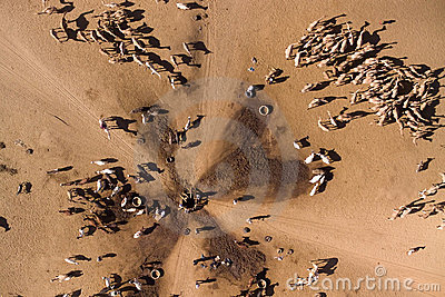camels-water-well-7924322
