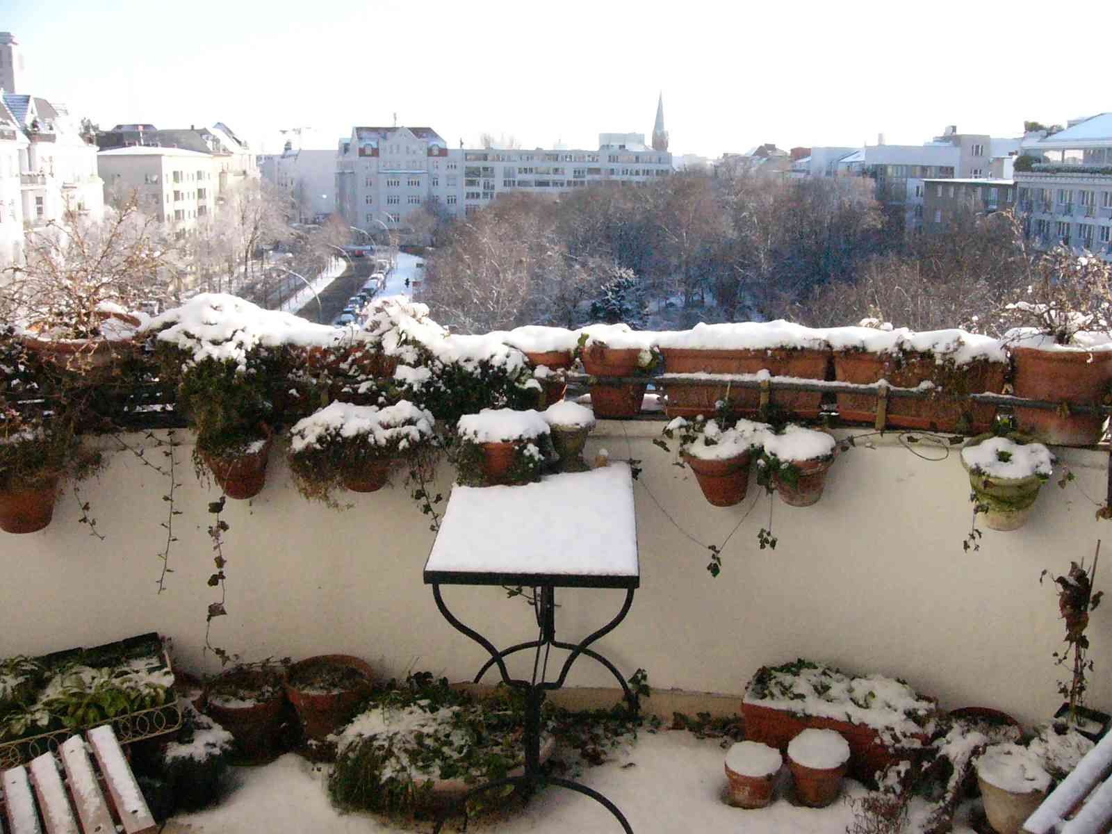 Was blüht bei euch gerade auf dem Balkon, im Garten & Co? (Seite 263 ...