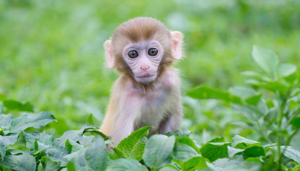 Affenbabys Bilder