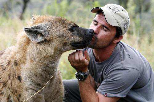 Animales-en-video-kevin-richardson-hiena