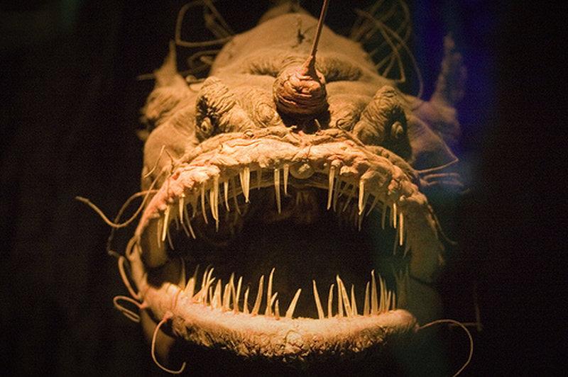 Ist der Blobfisch das häßlichste Tier der Welt?