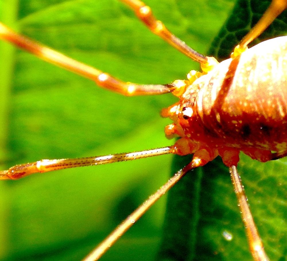 Spinnen Im Garten: Insekten Und Spinnen (Seite 133)