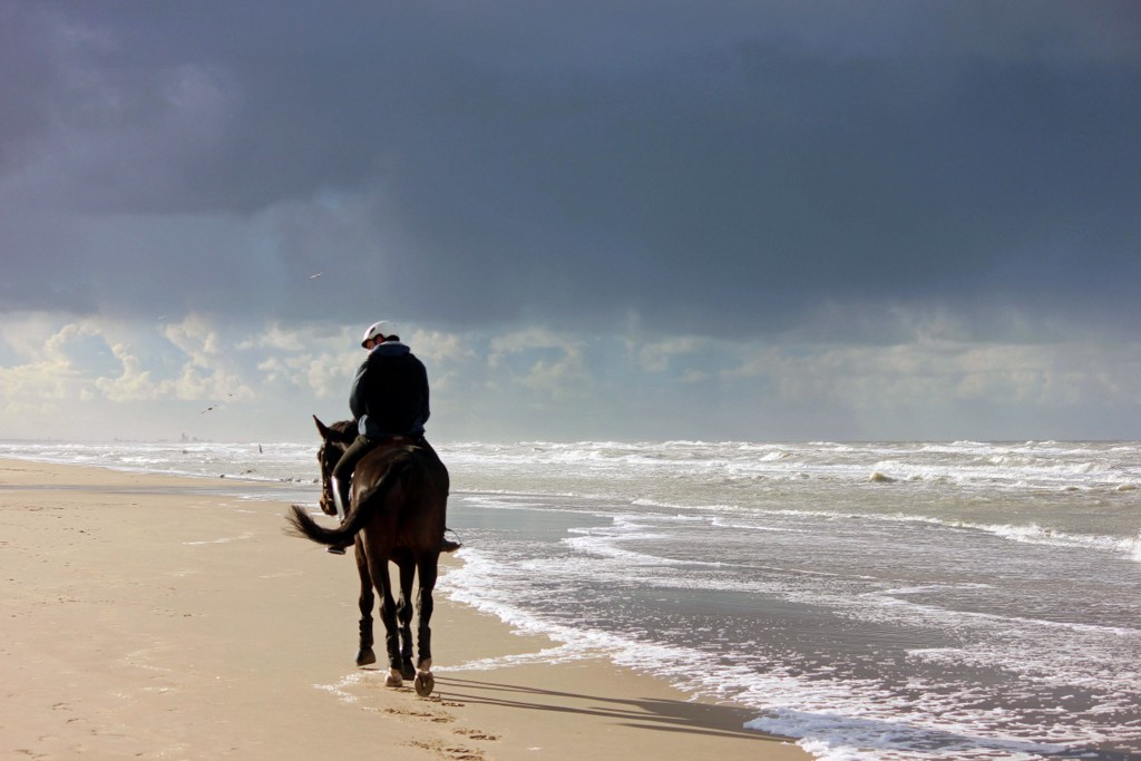 lone-rider-on-a-beach-northsea 112515792
