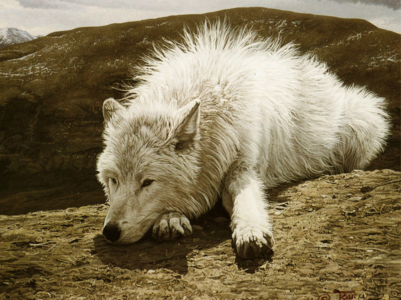 White-Wolf-Latest-Wallpapers-2012-1