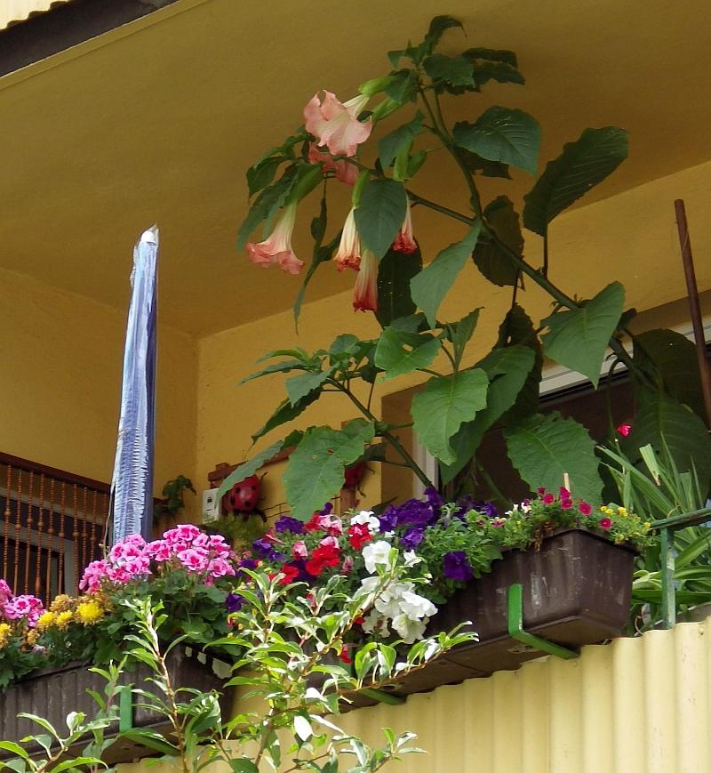 was bl ht bei euch gerade auf dem balkon im garten co seite 278 allmystery. Black Bedroom Furniture Sets. Home Design Ideas